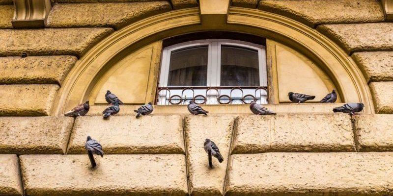 Голуби под окном