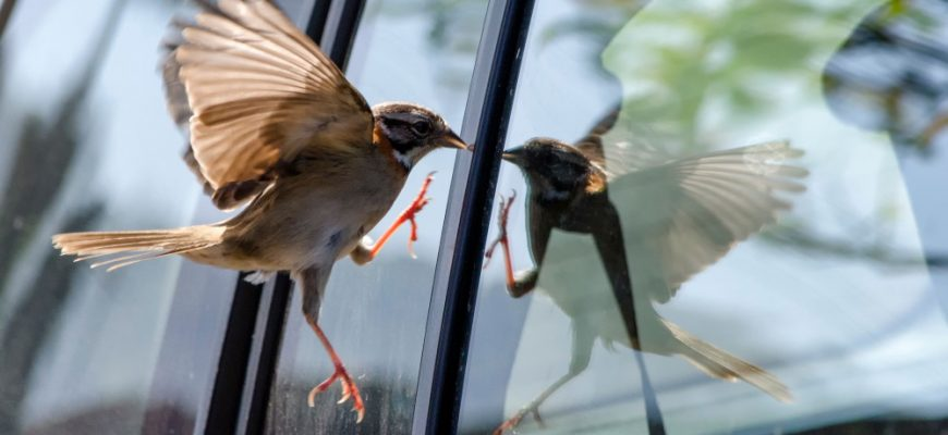 Птица врезалась в стекло